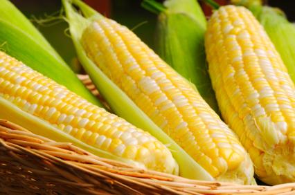 Corn_maize